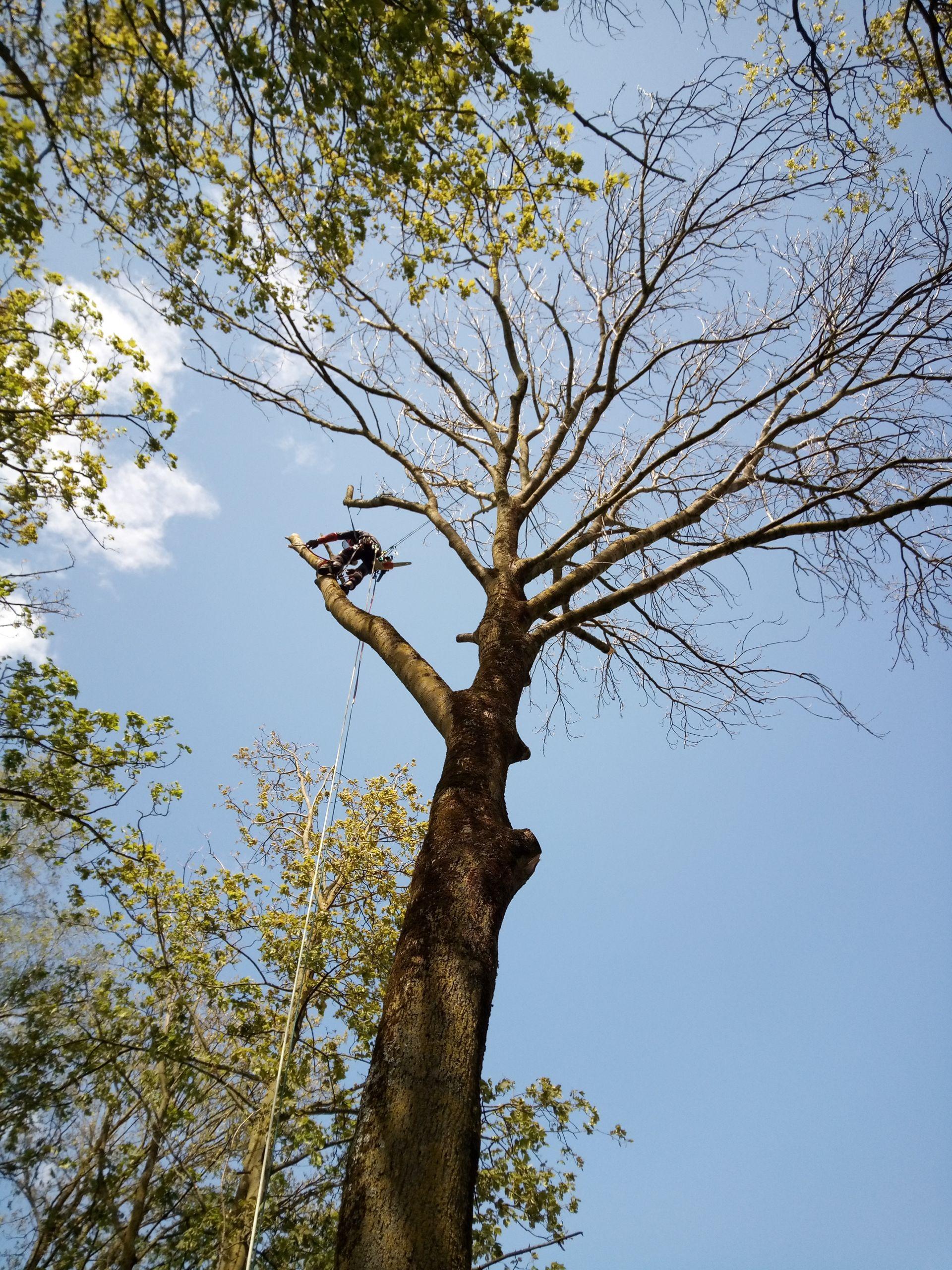 Elegage arbre